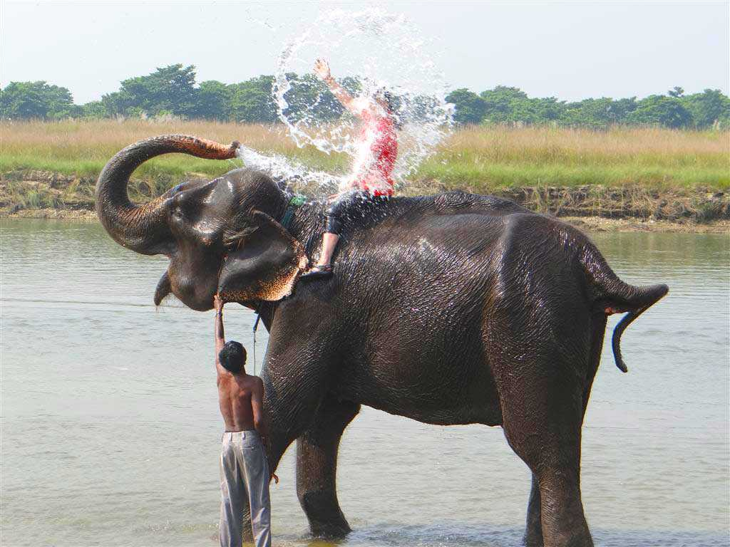the bath and the elephant Now everyone can bathe the elephant , join this adventure tour for unforgettable experience enjoy an incredible experience with the elephants in their bathing lake as they take you on their morning bath.