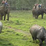 safari-chitwan