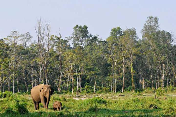 Jungle Safari Nepal